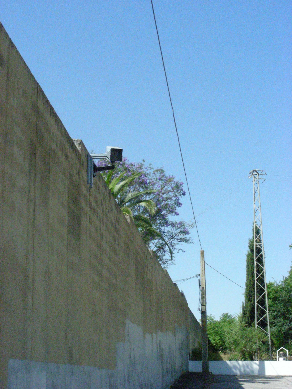 PalmardeTroya-3